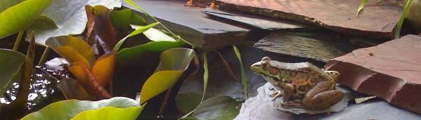 Garden Frog_July 2012 281